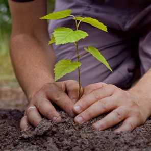 Servicio de plantado y Forestación - Vivero kirken