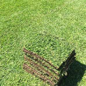 Panes de grama Bahiana