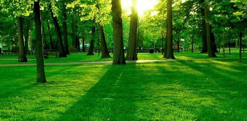 Diseño y ejecución de espacios verdes - vivero Kirken